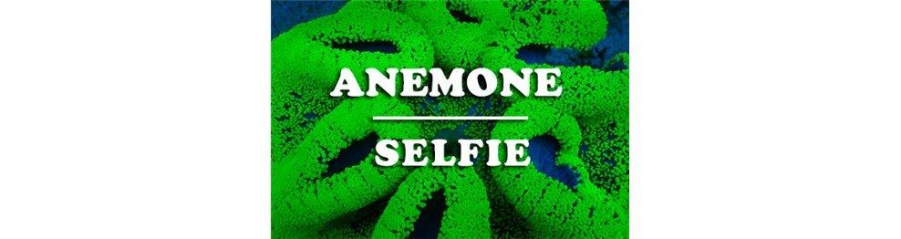 Anemones (WYSIWYG)