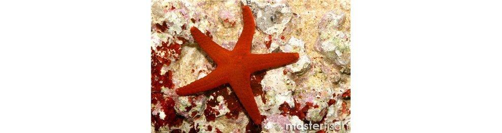 Oursins, étoiles et vers marins